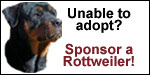 Click here to sponsor a Rottweiler in need!